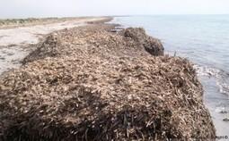 La posidonia spiaggiata come risorsa per la bioedilizia | BIOEDILIZIA | Scoop.it