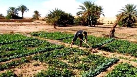 La réussite d'un investissement agricole tributaire d'une bonne analyse du sol - Algérie Presse Service | Agriculture et Alimentation méditerranéenne durable | Scoop.it