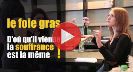 Foie gras : scandale dans les palaces parisiens | Foie gras -> Stop gavage | Nature Animals humankind | Scoop.it