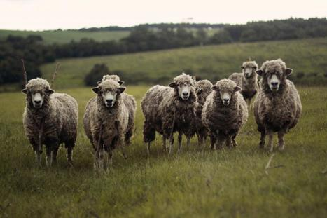 Don't Be A Sheep | IRIS | Fiduciary Wealth Partners | Scoop.it