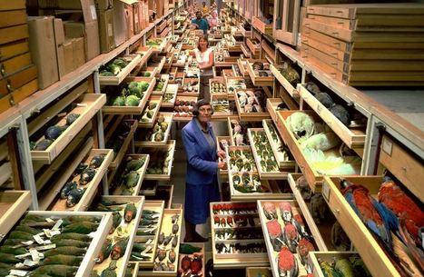 Στα άδυτα της μυστικής συλλογής του Μουσείου Φυσικής Ιστορίας Σμιθσόνιαν | omnia mea mecum fero | Scoop.it