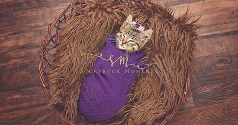Inspirée par des photos de naissance, elle photographie le chaton qu'elle a adopté | La photographie | Scoop.it