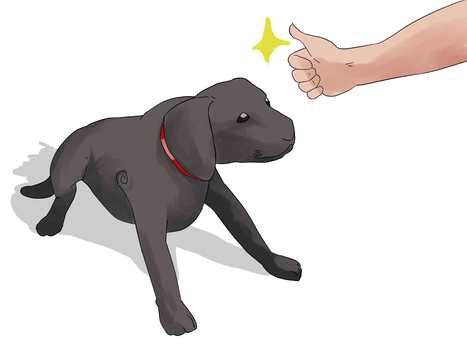 How to Train Labrador Retrievers | Labrador puppies | Scoop.it