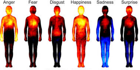 REVEALED: Where Emotions Are 'Felt' In Your Body | YogaLibrarian | Scoop.it
