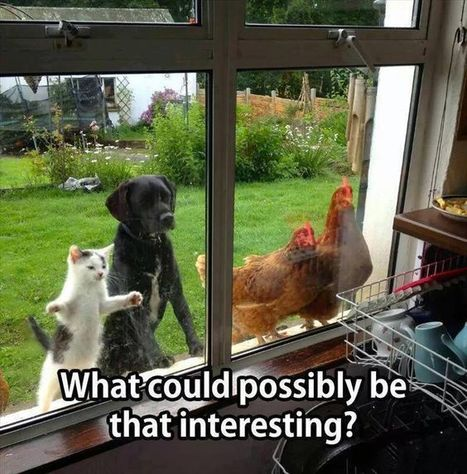 What Could Be So Interesting? | Funny Stuff | Scoop.it
