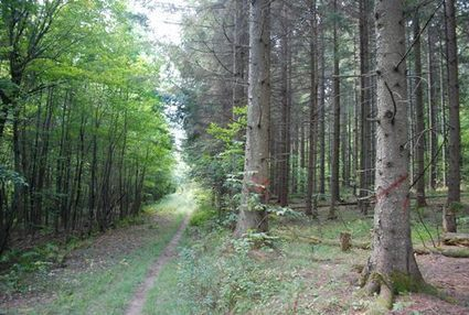 Vermont: Developers, administration chop down forest fragmentation bill   Timberland Investment   Scoop.it