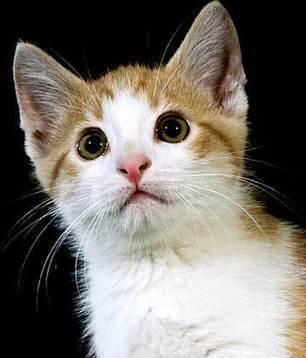 Cat Talking   Pet Care News   Scoop.it