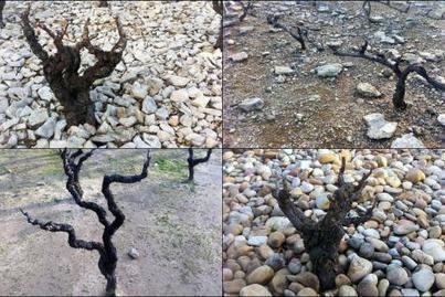 Le goût du sol? | Le Vin et + encore | Scoop.it