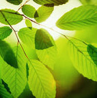 Quantum Photosynthesis - About - News & Issues | Physics as we know it. | Scoop.it