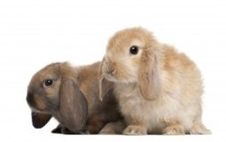 Burgess Pet Care » Blog Archive » Rabbit Health – What Owners Need to Know | Dogs | Scoop.it