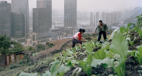 China's Surreal Urban Farms - Foreign Policy (blog)   Vertical Farm - Food Factory   Scoop.it
