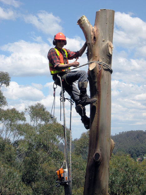 What Is Tree Lopping?   Latest Tree Lopping Techniques Used in Brisbane   Scoop.it