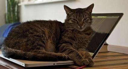 Mais pourquoi aimons-nous tant les vidéos de chats ? La réponse d'un chercheur | CaniCatNews-actualité | Scoop.it