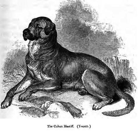 Endangered Dog Breeds and the Market Forces Behind Them   enjoy yourself   Scoop.it