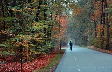 In the Veluwe, (Netherlands) today… a place to visit,... | Classical Music | Scoop.it