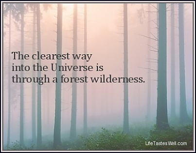 The clearest way into the Universe is through a forest wilderness. | Indigenous Spirituality | Scoop.it