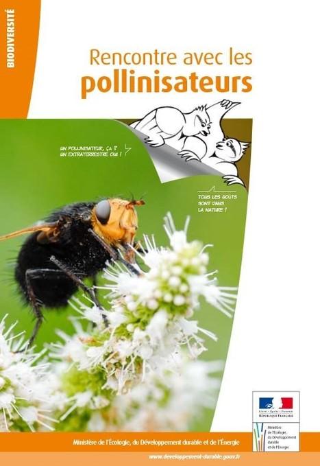 Rencontre avec les pollinisateurs   Les colocs du jardin   Scoop.it