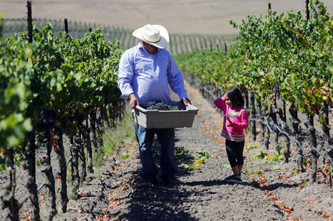 Latino Winemakers Rise in California, Through the Ranks | Latin@s and Education | Scoop.it