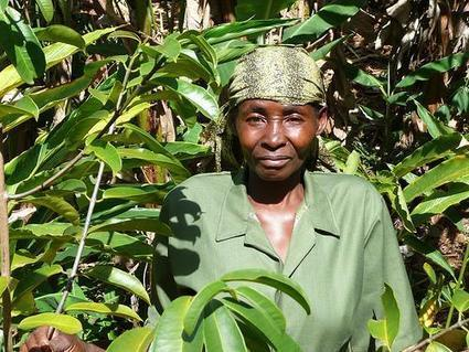 New study finds African carbon projects can help poor famers | CGIAR Climate | Climate Smart Agriculture | Scoop.it