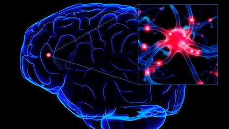 Con menos grasas se conserva mejor el cerebro | Nutricion | Scoop.it