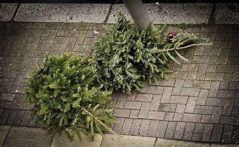 O Tannenbaum: Que faire de votre sapin après Noël? | ça m'intéresse! | Scoop.it