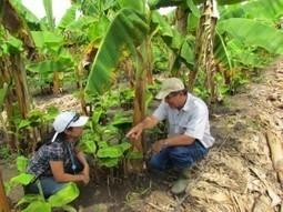 Naciones Unidas Exhorta a aplicar políticas impulsoras de agricultura familiar | El Salvador | Scoop.it