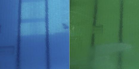 L'eau de la piscine olympique est devenue verte et personne ne sait pourquoi (VIDÉO) | Construction, entretien piscines | Scoop.it