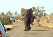 Kruger Park: free entry week for locals - South Africa.info | Kruger & African Wildlife | Scoop.it
