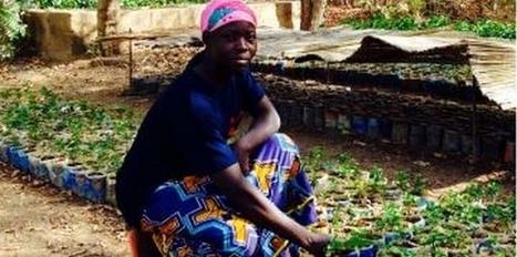 La ferme de Guié : un laboratoire pour refertiliser les terres du Sahel | Chimie verte et agroécologie | Scoop.it