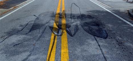Les fourmis, meilleures pour gérer la circulation que les êtres humains | EntomoNews | Scoop.it