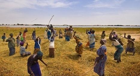 La adaptación agrícola al cambio climático es urgente | cambio climático | Scoop.it