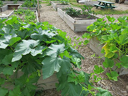 Nebraska's Urban Community Gardening Scene Grows Produce and Relationships | Community Gardening Resources | Scoop.it