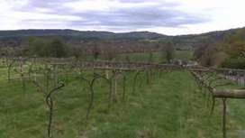 Welsh vineyards 'could increase to 50 by 2035' - BBC News   Vitabella Wine Daily Gossip   Scoop.it