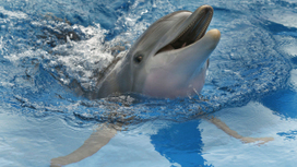 Dying dolphins keep washing up on the Atlantic. Here's what could be killing them | All about water, the oceans, environmental issues | Scoop.it