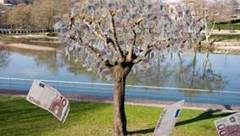 Magic money trees found growing in the Cayman Island | Crazy World | Scoop.it