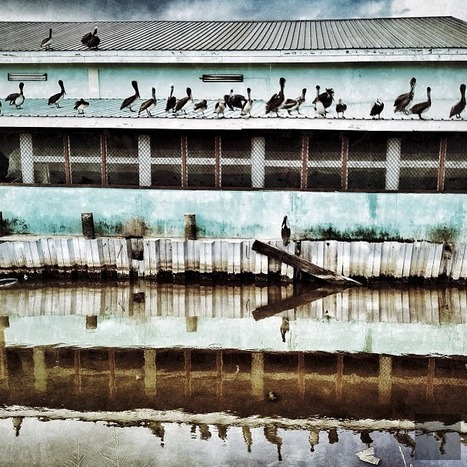 Pelicans line the roof of the Dangriga Fish Market | Belize in Social Media | Scoop.it