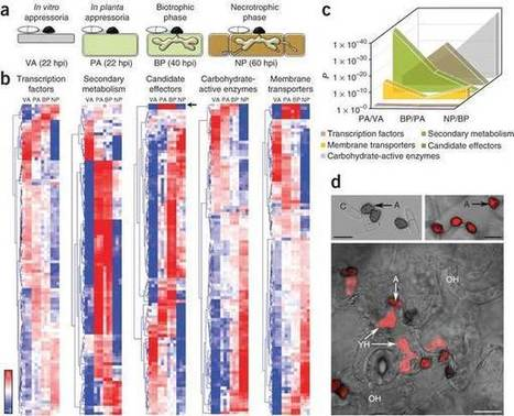Nature Genetics: Lifestyle transitions in plant pathogenic Colletotrichum fungi deciphered by genome and transcriptome analyses | My papers | Scoop.it