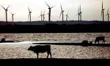 UK windfarms generate record amount of power | Climate Policy | Scoop.it