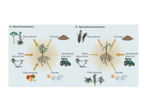 Going back to the roots: the microbial ecology of the rhizosphere   EcoFINDERS -  Science for a sustainable use of soils   Scoop.it