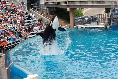 SEAWORLD TO FACE LEGAL ACTION | All about water, the oceans, environmental issues | Scoop.it