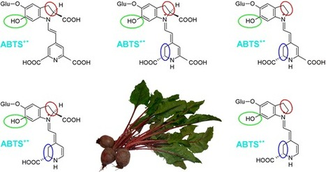 Studies on Nonenzymatic Oxidation Mechanisms in Neobetanin, Betanin, and Decarboxylated Betanins - Journal of Agricultural and Food Chemistry (ACS Publications)   plant cell genetics   Scoop.it