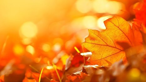 Four Seasons - Poetry for the Autumn equinox - BBC Radio 4 | Pure Poetry | Scoop.it
