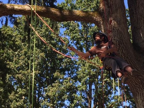I Went to a Tree Climbing School to Overcome My Fear of Failure | VICE | United States | treetools | Scoop.it