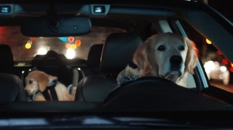 Ad of the Day: Subaru's Driving Dog Family Returns for More Adorably Comical Spots | Small Business On The Web | Scoop.it
