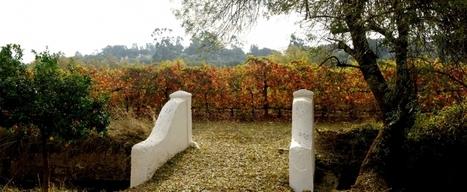 Herdade do Mouchao | Vinum Sanguis Vitae | Wired Wines of Alentejo | Scoop.it