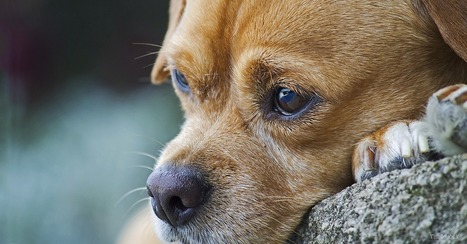 Dog Reunites with Family after Traveling 1100 Miles | Pet-Related News | Scoop.it