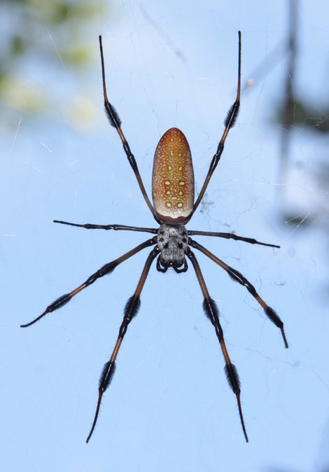Can Spiders Count? | animals and prosocial capacities | Scoop.it
