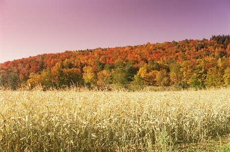 Scenic Fall Color in the Country | The Miracle of Fall | Scoop.it