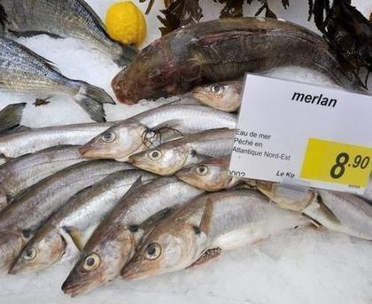 Les professionnels de la pêche hissent le Pavillon France.    agro-media.fr   Actualité de l'Industrie Agroalimentaire   agro-media.fr   Scoop.it