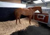 Box rest, exercise, muscle development and horse health by Kirsty Haines | Horsemart | all things horsey | Scoop.it